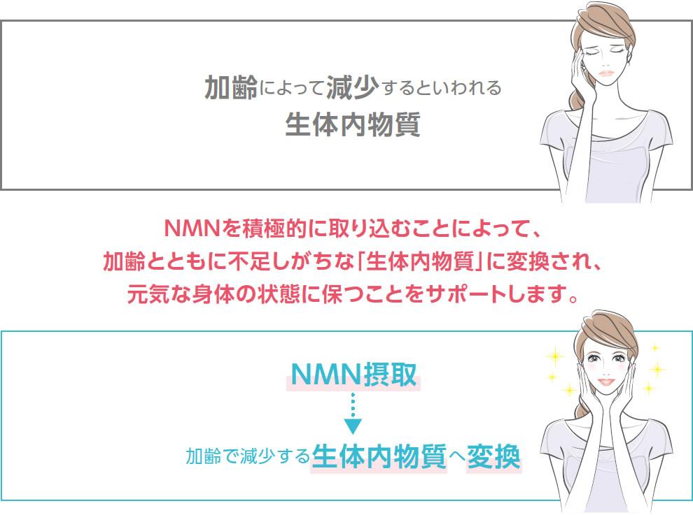 NMNを接種し加齢で減少する生体内物質へ変換